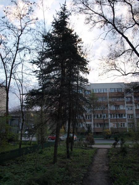 bytomska5